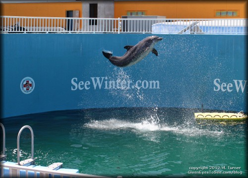 nick the dolphin at the clearwater marine aquarium