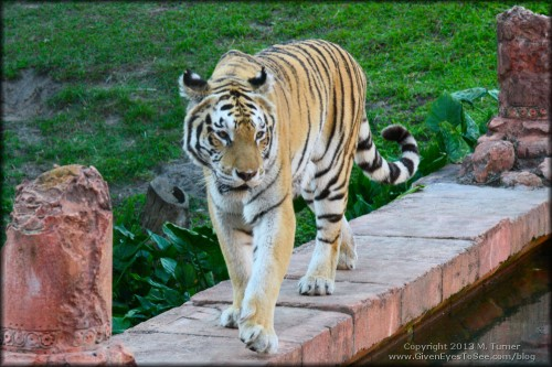 Feed me! (Animal Kingdom, WDW)
