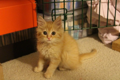 Orange, fluffy and adorable.