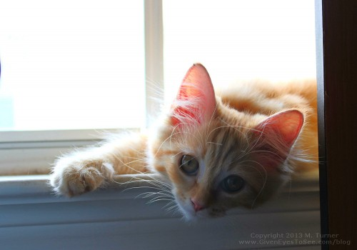 ginger-window-62813a