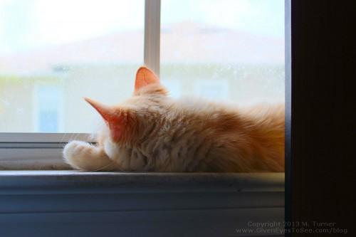 ginger-window-62813b