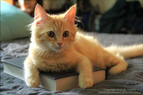 Ginger says books are wonderful! Well, for laying on anyway.