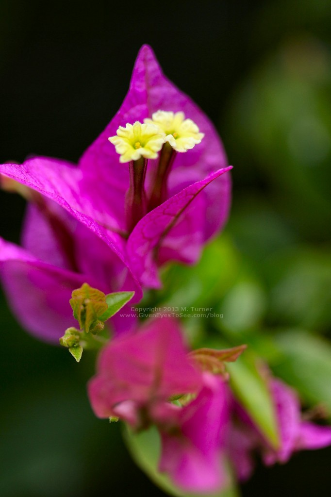 I loved the tiny little yellow flowers blooming within the pink petals.