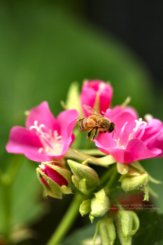 Bee flies to a flower for pollination.