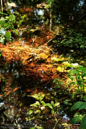 brooker-creek-may14a