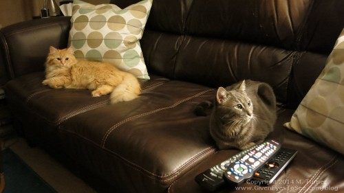 Ginger and Gracie on the couch
