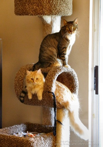Mika and Ginger on the cat tree