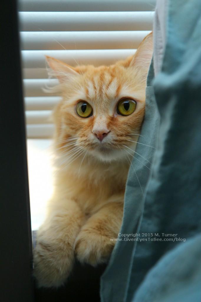 fluffy yellow orange tabby cat in window sill peeking out behind headboard frame
