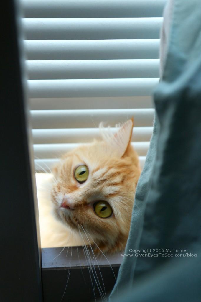 orange fluffy tabby cat in window yellow green eyes