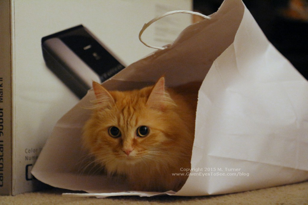 fluffy orange tabby cat in paper bag
