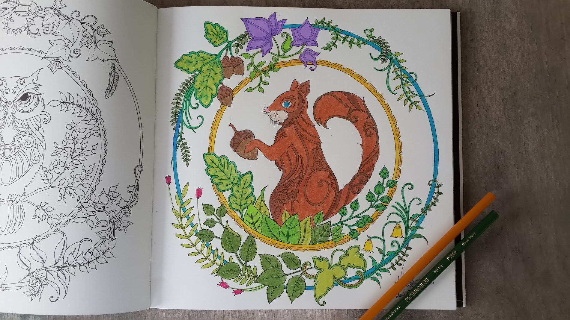 Enchanted forest coloring book website - Squirrel Colored Page From The Enchanted Forest Coloring Book